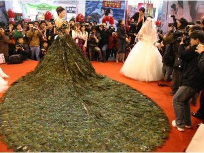 peacock-bridezilla-wedding-dress