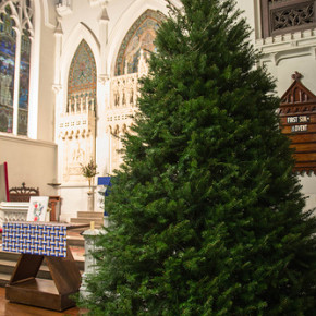 Advent Lutheran Church with the Sanctuary Tree